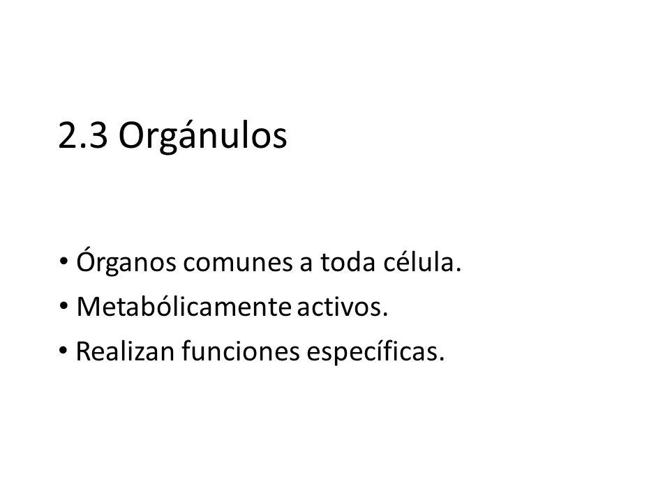 2.3 Orgánulos Metabólicamente activos. Realizan funciones específicas. Órganos comunes a toda célula.