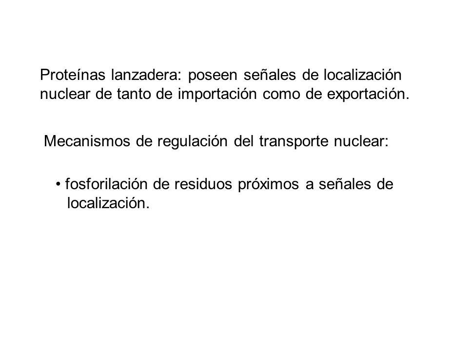 Proteínas lanzadera: poseen señales de localización nuclear de tanto de importación como de exportación. Mecanismos de regulación del transporte nucle