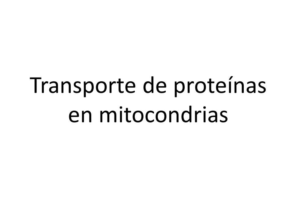 Transporte de proteínas en mitocondrias