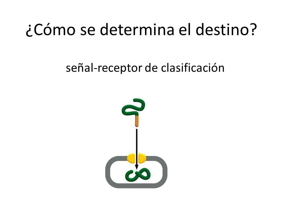 ¿Cómo se determina el destino? señal-receptor de clasificación