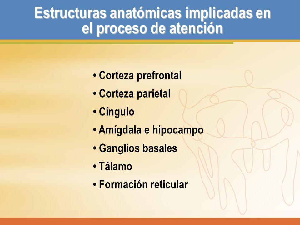 Estructuras anatómicas implicadas en el proceso de atención Corteza prefrontal Corteza parietal Cíngulo Amígdala e hipocampo Ganglios basales Tálamo F