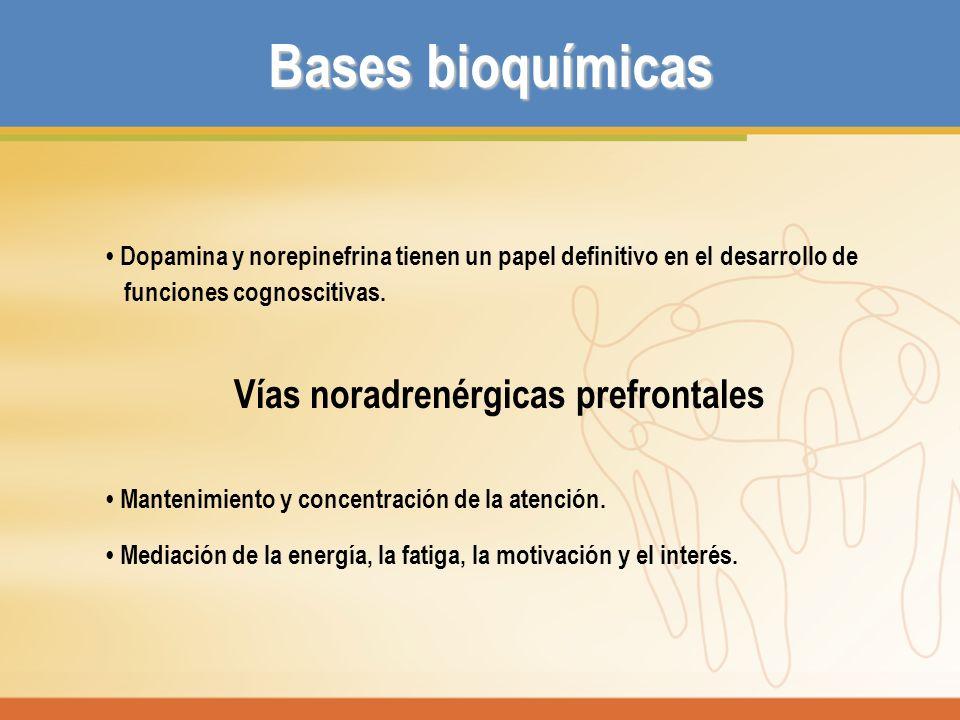 Bases bioquímicas Dopamina y norepinefrina tienen un papel definitivo en el desarrollo de funciones cognoscitivas. Vías noradrenérgicas prefrontales M