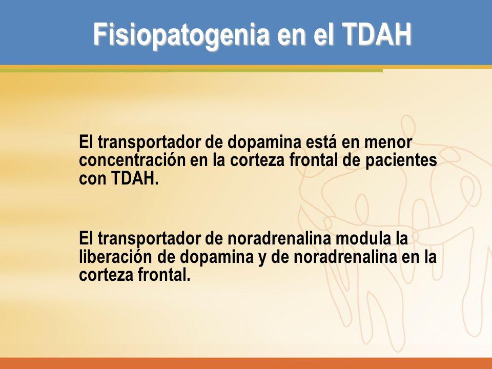 Fisiopatogenia en el TDAH El transportador de dopamina está en menor concentración en la corteza frontal de pacientes con TDAH. El transportador de no