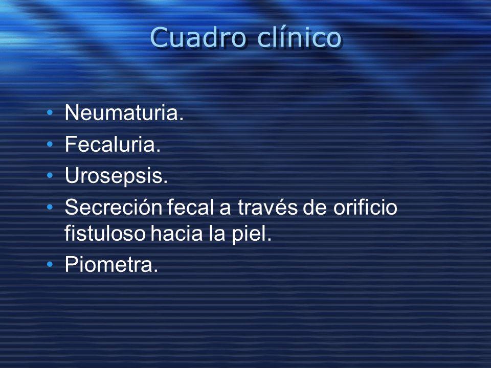 Cuadro clínico Neumaturia. Fecaluria. Urosepsis. Secreción fecal a través de orificio fistuloso hacia la piel. Piometra.