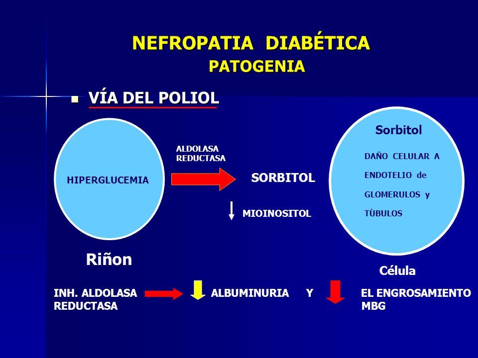 NEFROPATIA DIABÉTICA PATOGENIA NEFROPATIA DIABÉTICA PATOGENIA VÍA DEL POLIOL VÍA DEL POLIOL HIPERGLUCEMIA ALDOLASA REDUCTASA SORBITOL DAÑO CELULAR A E