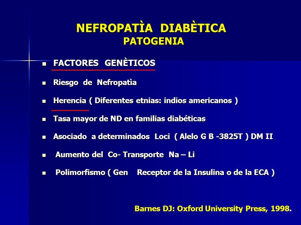NEFROPATÌA DIABÈTICA PATOGENIA NEFROPATÌA DIABÈTICA PATOGENIA FACTORES GENÈTICOS FACTORES GENÈTICOS Riesgo de Nefropatìa Riesgo de Nefropatìa Herencia