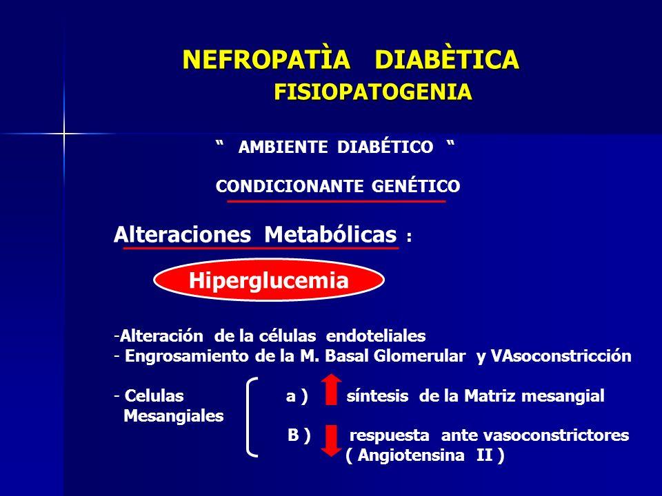 NEFROPATÌA DIABÈTICA FISIOPATOGENIA AMBIENTE DIABÉTICO CONDICIONANTE GENÉTICO Alteraciones Metabólicas : -Alteración de la células endoteliales - Engr