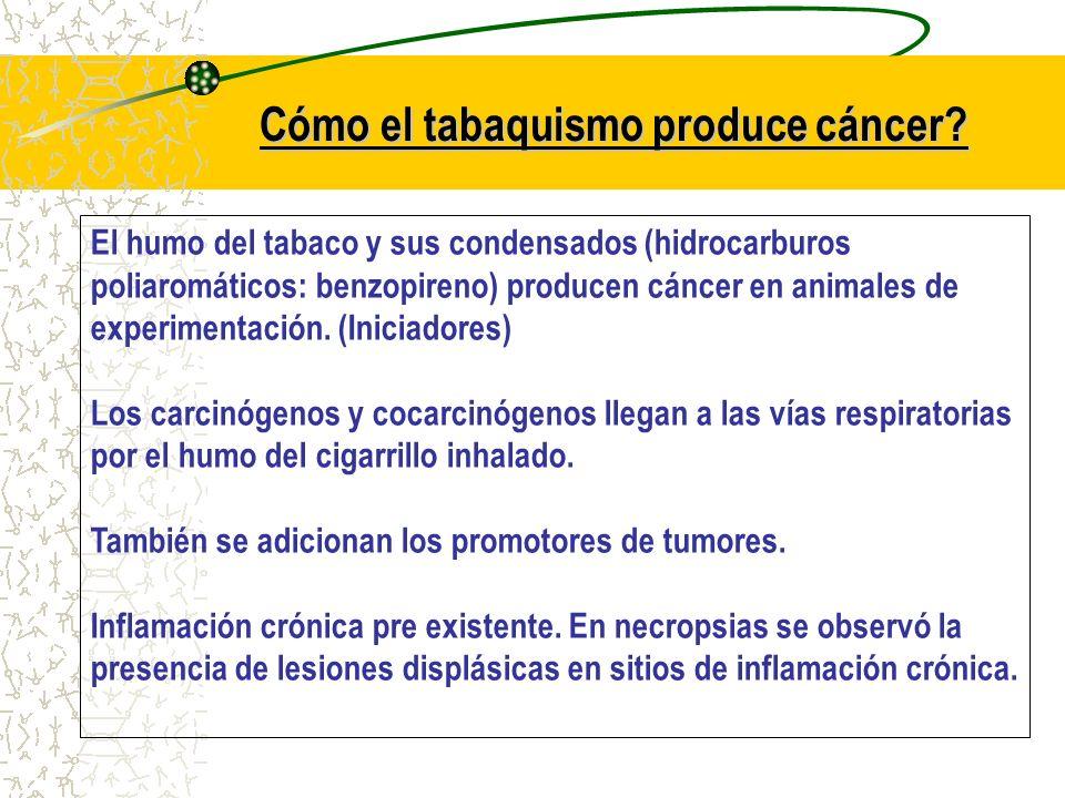 Cómo el tabaquismo produce cáncer? El humo del tabaco y sus condensados (hidrocarburos poliaromáticos: benzopireno) producen cáncer en animales de exp