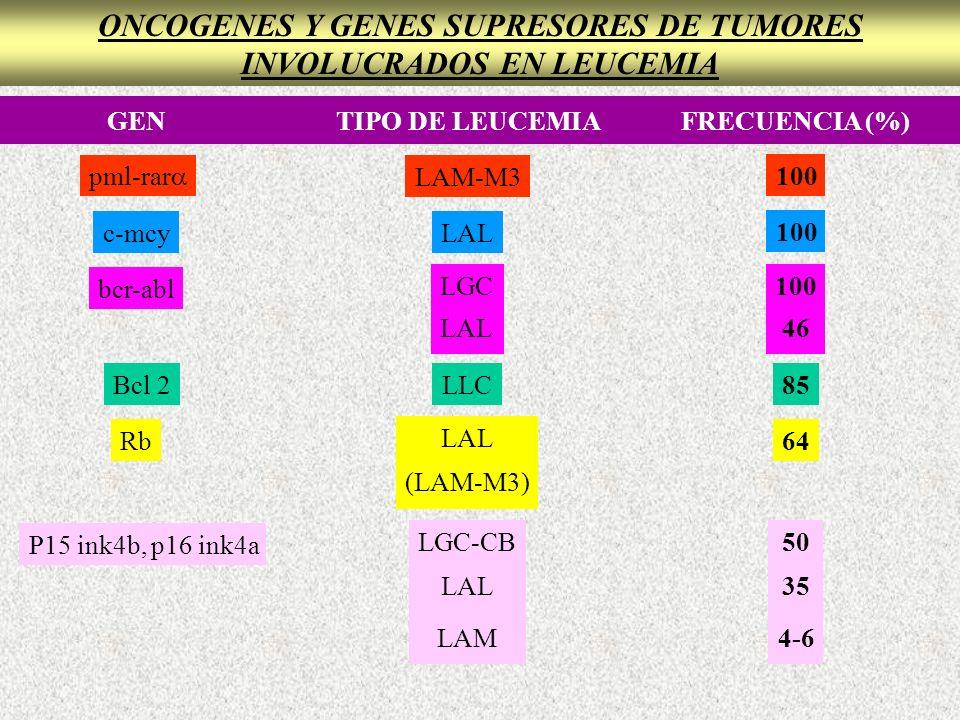 ONCOGENES Y GENES SUPRESORES DE TUMORES INVOLUCRADOS EN LEUCEMIA GENTIPO DE LEUCEMIAFRECUENCIA (%) pml-rar LAM-M3 100 c-mcyLAL LGC LAL LLC LAL (LAM-M3