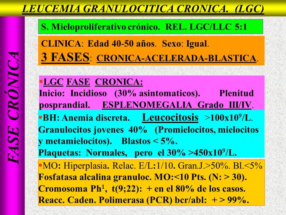 FASE CRÓNICA LGC FASE CRONICA: Inicio: Incidioso (30% asintomaticos). Plenitud posprandial. ESPLENOMEGALIA Grado III/IV. BH: Anemia discreta. Leucocit