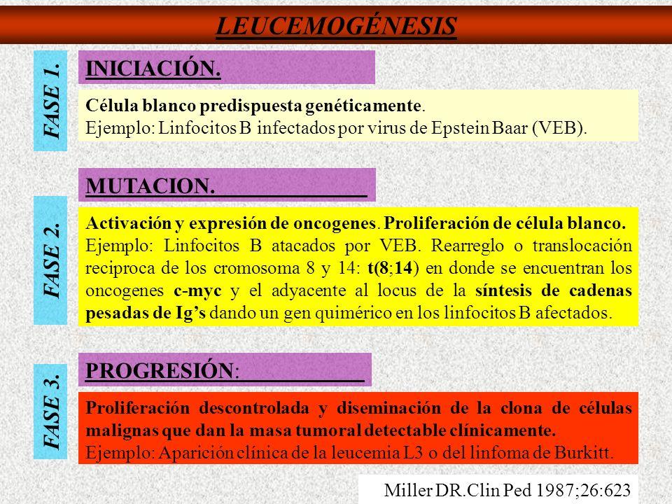 LEUCEMOGÉNESIS FASE 1. FASE 2. FASE 3. INICIACIÓN. MUTACION. PROGRESIÓN: Célula blanco predispuesta genéticamente. Ejemplo: Linfocitos B infectados po