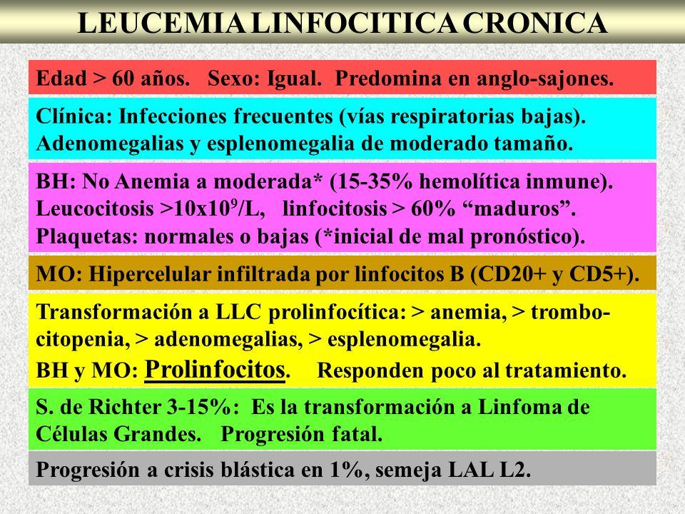 LEUCEMIA LINFOCITICA CRONICA Edad > 60 años. Sexo: Igual. Predomina en anglo-sajones. Clínica: Infecciones frecuentes (vías respiratorias bajas). Aden