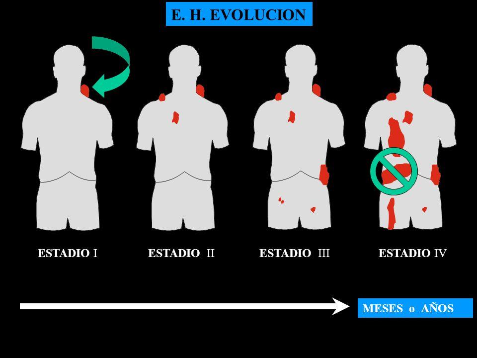 MESES o AÑOS ESTADIO IESTADIO IIESTADIO IIIESTADIO IV E. H. EVOLUCION