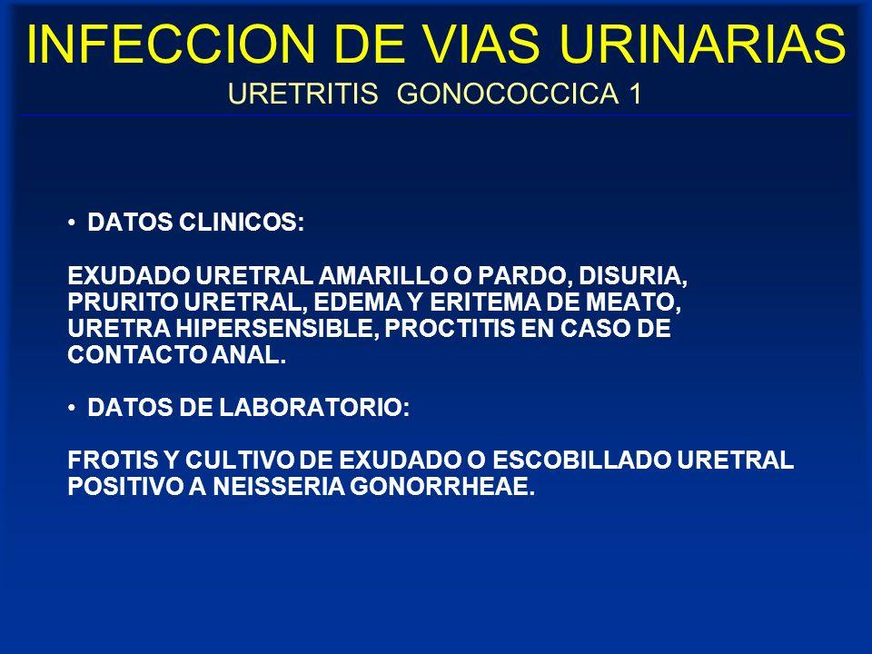 INFECCION DE VIAS URINARIAS URETRITIS GONOCOCCICA 1 DATOS CLINICOS: EXUDADO URETRAL AMARILLO O PARDO, DISURIA, PRURITO URETRAL, EDEMA Y ERITEMA DE MEA