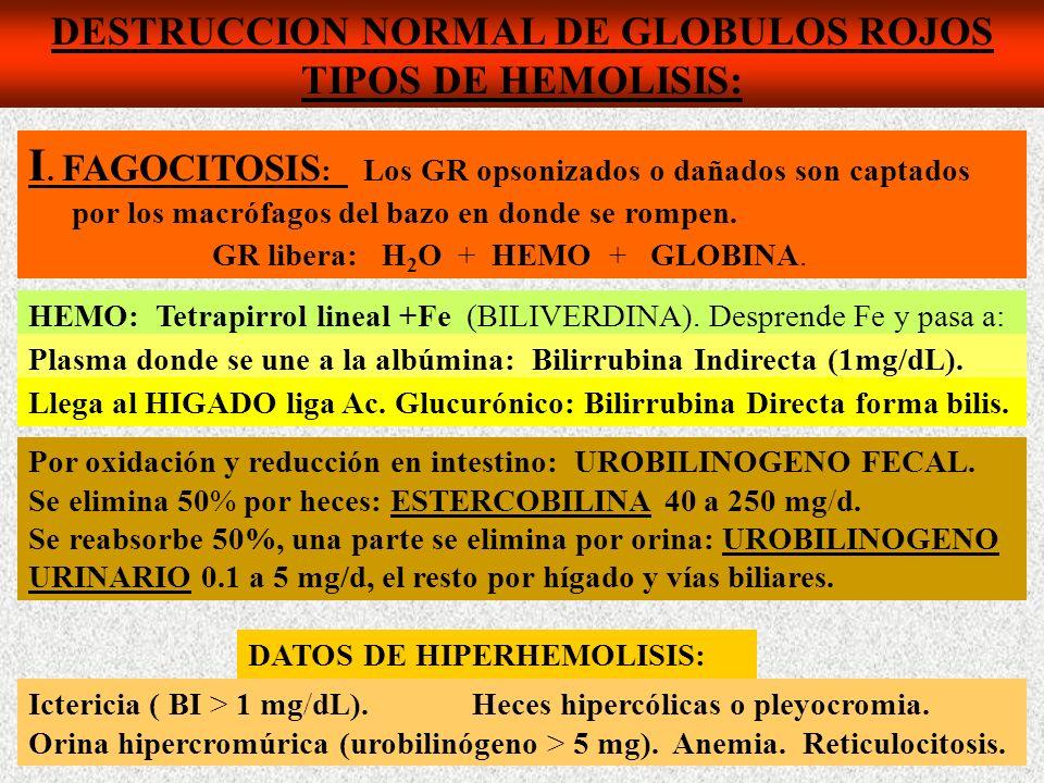 DESTRUCCION NORMAL DE GLOBULOS ROJOS TIPOS DE HEMOLISIS: I.