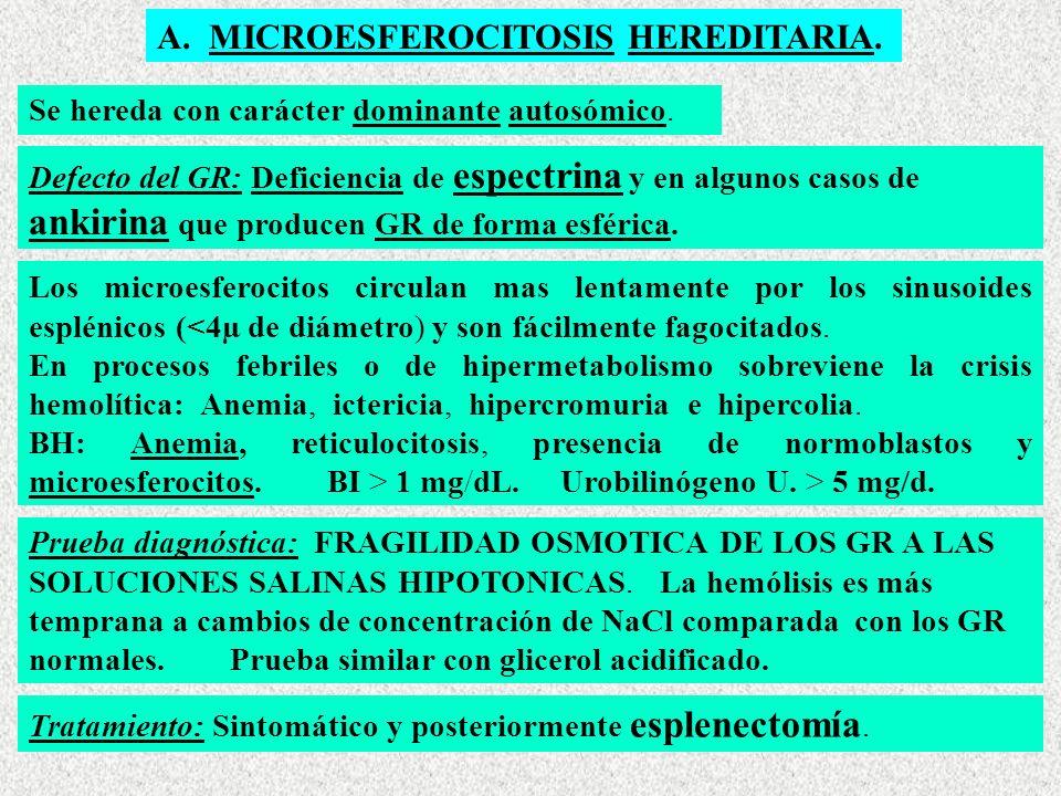 A.MICROESFEROCITOSIS HEREDITARIA. Se hereda con carácter dominante autosómico.