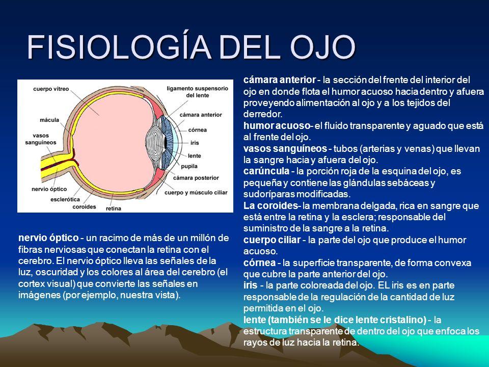 FISIOLOGÍA DEL OJO cámara anterior - la sección del frente del interior del ojo en donde flota el humor acuoso hacia dentro y afuera proveyendo alimentación al ojo y a los tejidos del derredor.