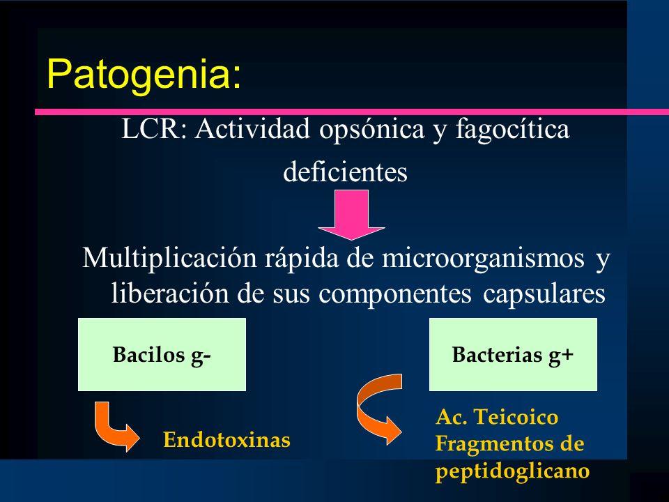 Patogenia: LCR: Actividad opsónica y fagocítica deficientes Multiplicación rápida de microorganismos y liberación de sus componentes capsulares Bacilo