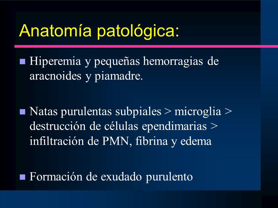 Anatomía patológica: n Hiperemia y pequeñas hemorragias de aracnoides y piamadre. n Natas purulentas subpiales > microglia > destrucción de células ep