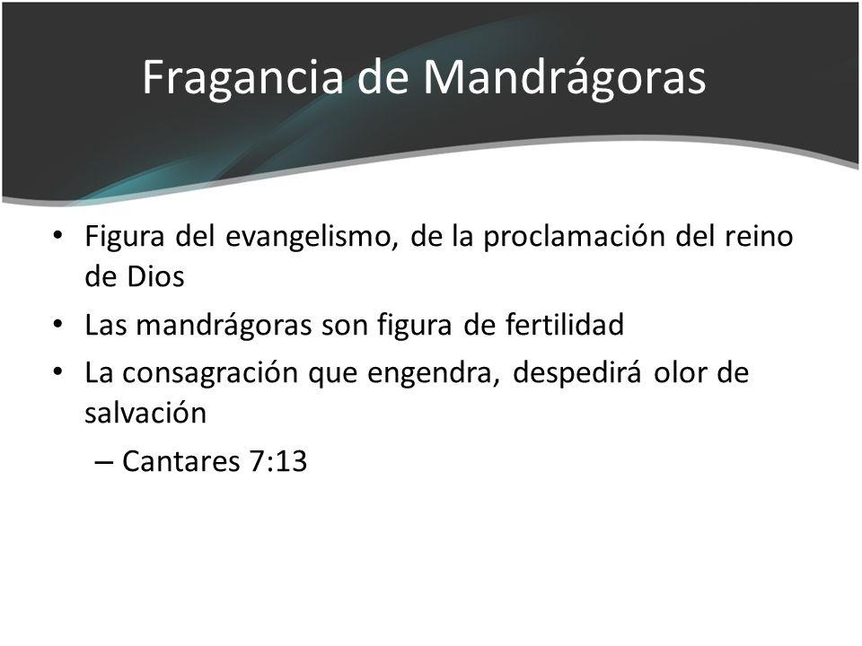 Fragancia de Mandrágoras Figura del evangelismo, de la proclamación del reino de Dios Las mandrágoras son figura de fertilidad La consagración que eng