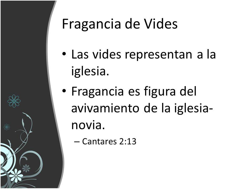 Fragancia de Vides Las vides representan a la iglesia. Fragancia es figura del avivamiento de la iglesia- novia. – Cantares 2:13
