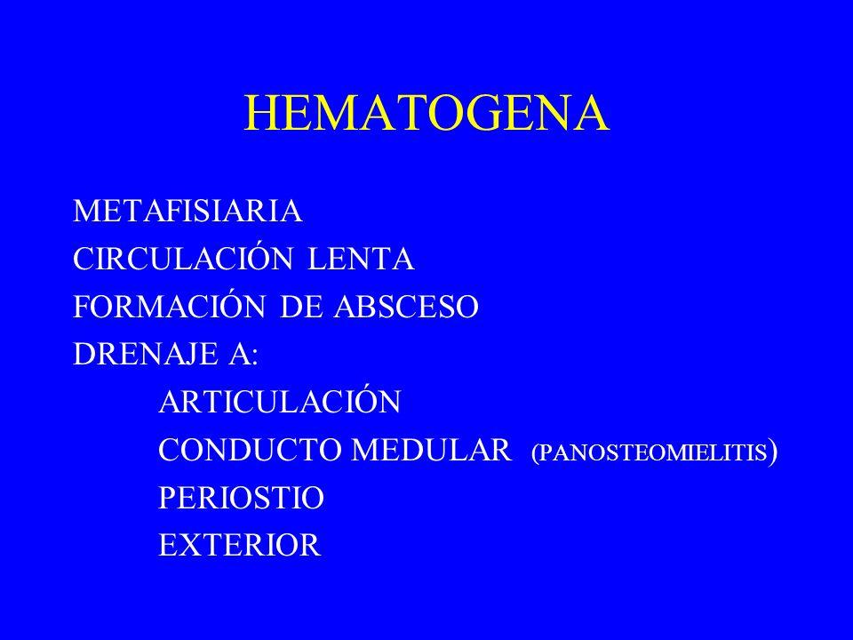 HEMATOGENA METAFISIARIA CIRCULACIÓN LENTA FORMACIÓN DE ABSCESO DRENAJE A: ARTICULACIÓN CONDUCTO MEDULAR (PANOSTEOMIELITIS ) PERIOSTIO EXTERIOR