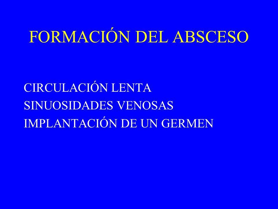 FORMACIÓN DEL ABSCESO CIRCULACIÓN LENTA SINUOSIDADES VENOSAS IMPLANTACIÓN DE UN GERMEN