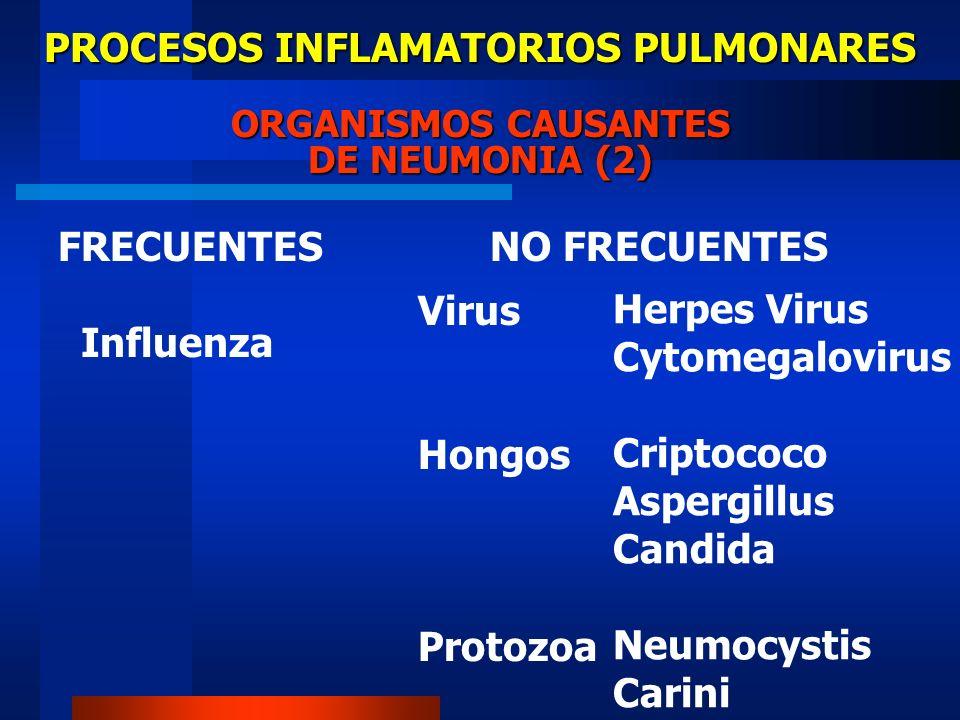 PROCESOS INFLAMATORIOS PULMONARES ORGANISMOS CAUSANTES DE NEUMONIA (2) FRECUENTES Influenza Herpes Virus Cytomegalovirus Criptococo Aspergillus Candid