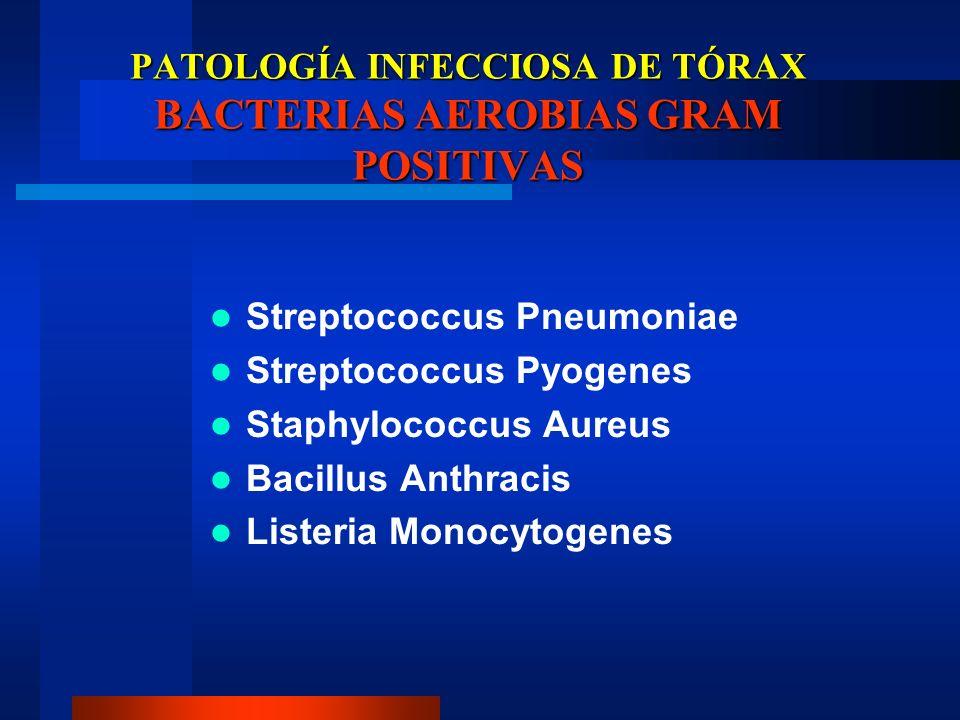 PATOLOGÍA INFECCIOSA DE TÓRAX BACTERIAS AEROBIAS GRAM POSITIVAS Streptococcus Pneumoniae Streptococcus Pyogenes Staphylococcus Aureus Bacillus Anthrac