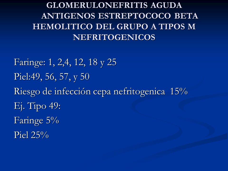 GLOMERULONEFRITIS AGUDA ANTIGENOS ESTREPTOCOCO BETA HEMOLITICO DEL GRUPO A TIPOS M NEFRITOGENICOS Faringe: 1, 2,4, 12, 18 y 25 Piel:49, 56, 57, y 50 R