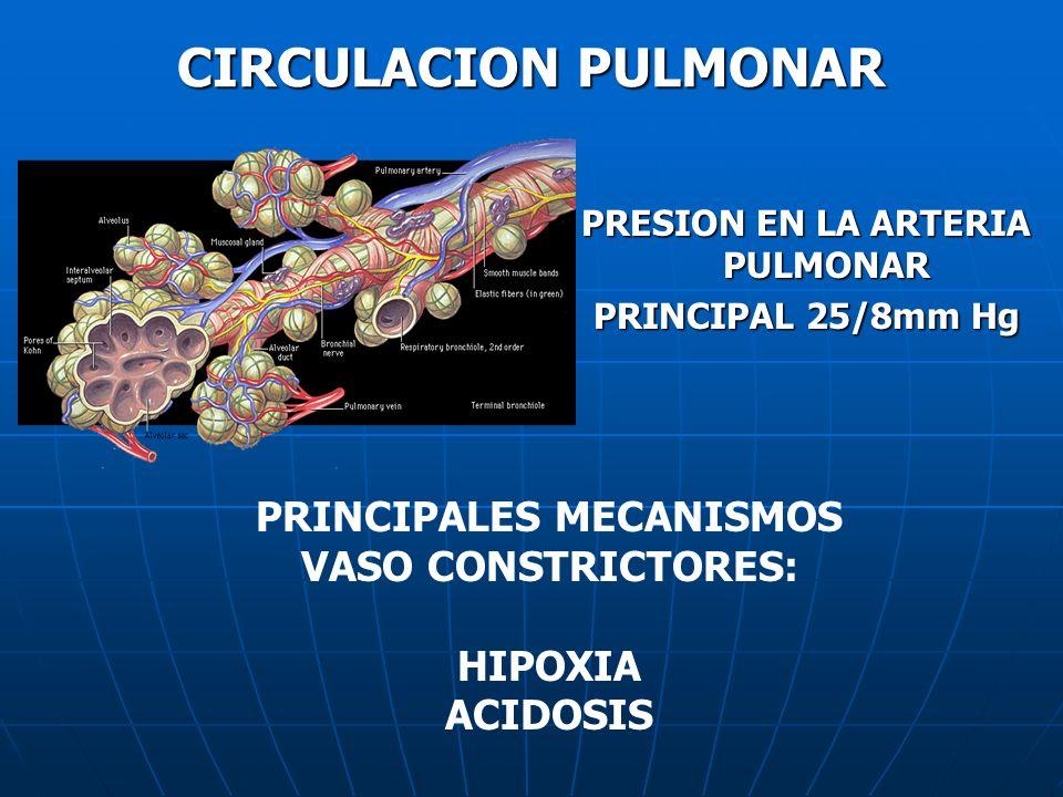 PRESION EN LA ARTERIA PULMONAR PRINCIPAL 25/8mm Hg PRINCIPALES MECANISMOS VASO CONSTRICTORES: HIPOXIA ACIDOSIS