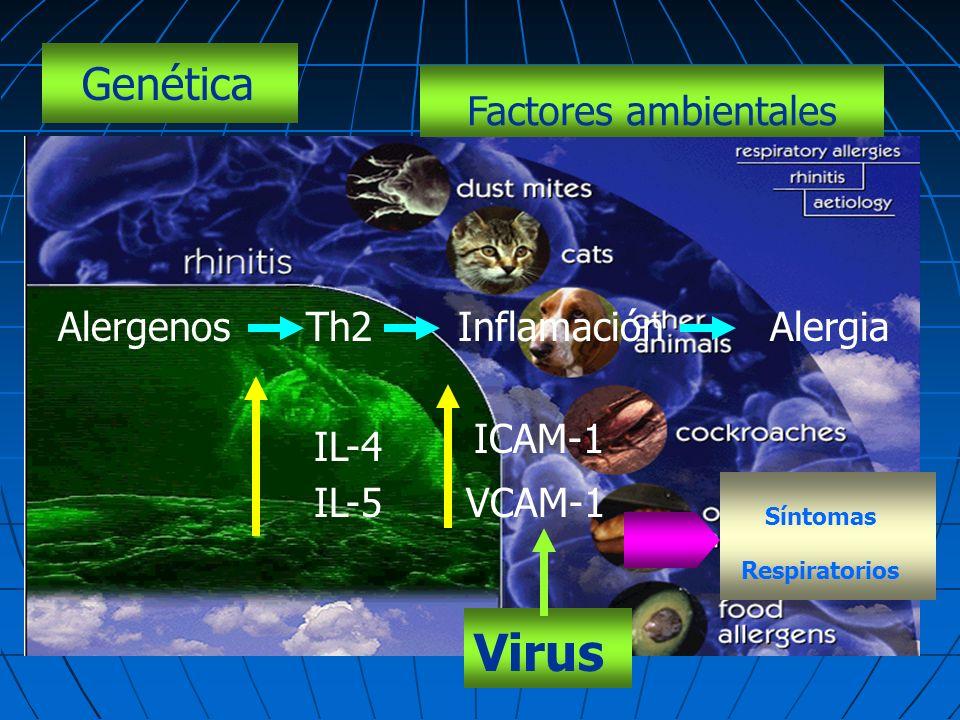 Genética Factores ambientales AlergenosTh2InflamaciónAlergia IL-4 IL-5 ICAM-1 VCAM-1 Síntomas Respiratorios Virus