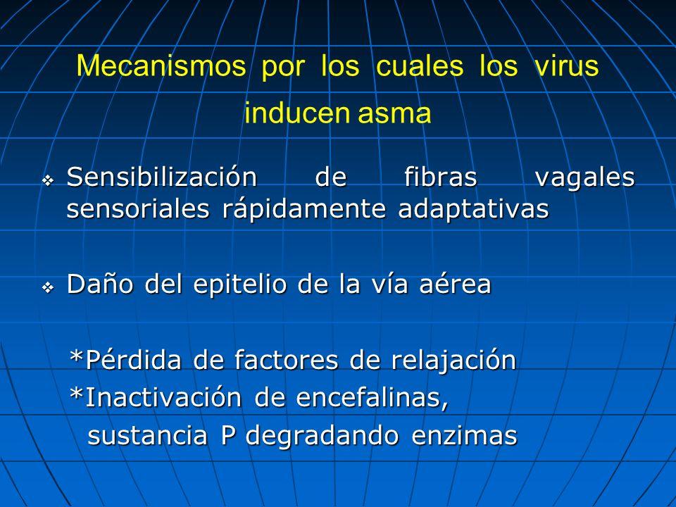 Mecanismos por los cuales los virus inducen asma Sensibilización de fibras vagales sensoriales rápidamente adaptativas Sensibilización de fibras vagal