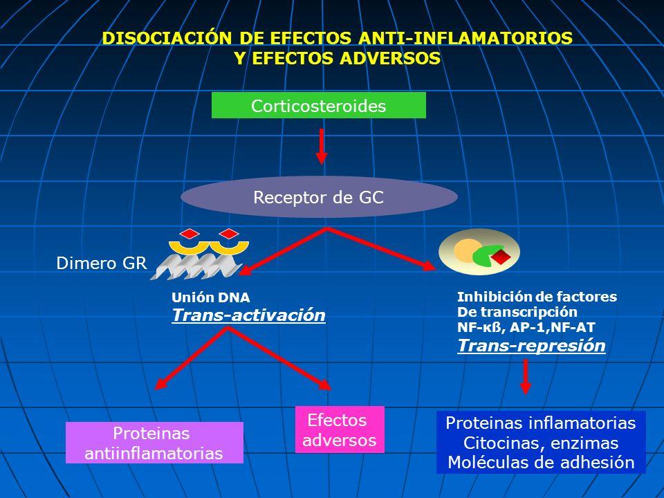 Corticosteroides Receptor de GC Proteinas antiinflamatorias Efectos adversos Proteinas inflamatorias Citocinas, enzimas Moléculas de adhesión Dimero G