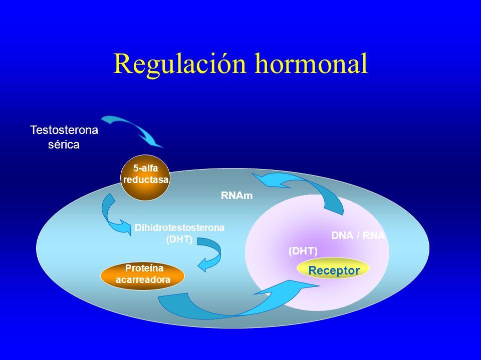 Regulación hormonal Testosterona sérica 5-alfa reductasa Dihidrotestosterona (DHT ) DNA / RNA RNAm Proteína acarreadora Receptor