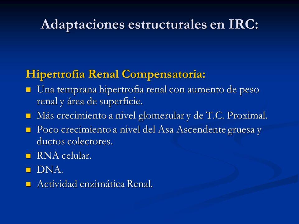 Adaptaciones estructurales en IRC: Hipertrofia Renal Compensatoria: Una temprana hipertrofia renal con aumento de peso renal y área de superficie. Una