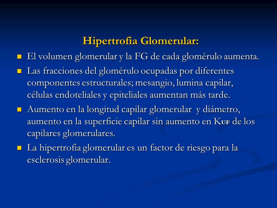 Hipertrofia Glomerular: El volumen glomerular y la FG de cada glomérulo aumenta. El volumen glomerular y la FG de cada glomérulo aumenta. Las fraccion