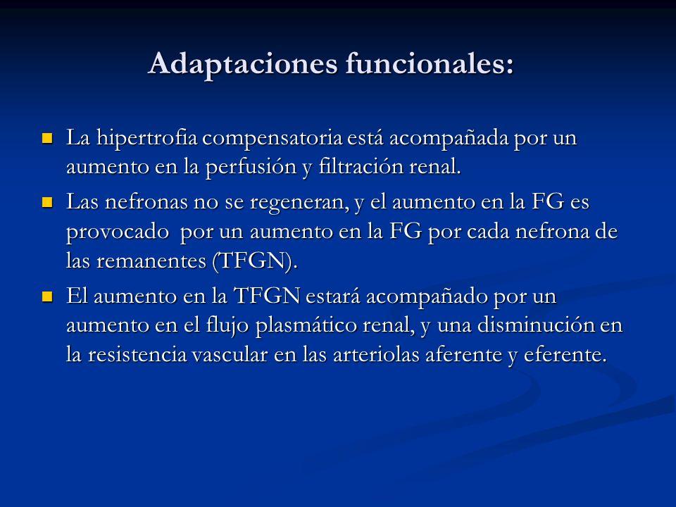 Adaptaciones funcionales: Adaptaciones funcionales: La hipertrofia compensatoria está acompañada por un aumento en la perfusión y filtración renal. La