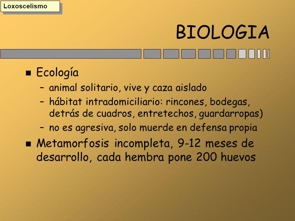 BIOLOGIA n Ecología –animal solitario, vive y caza aislado –hábitat intradomiciliario: rincones, bodegas, detrás de cuadros, entretechos, guardarropas