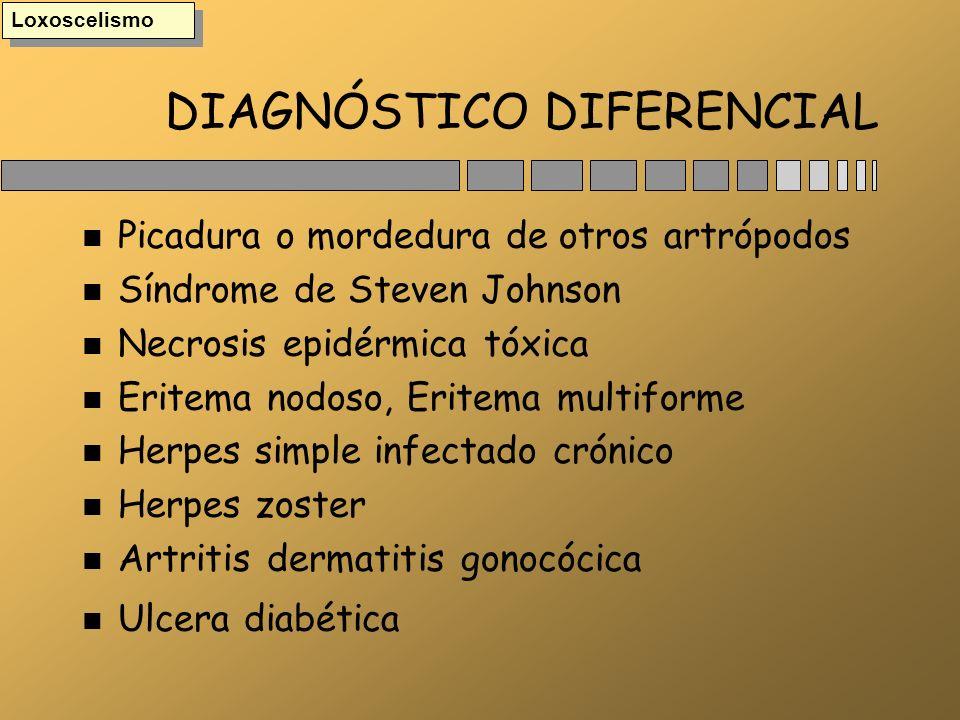 DIAGNÓSTICO DIFERENCIAL n Picadura o mordedura de otros artrópodos n Síndrome de Steven Johnson n Necrosis epidérmica tóxica n Eritema nodoso, Eritema