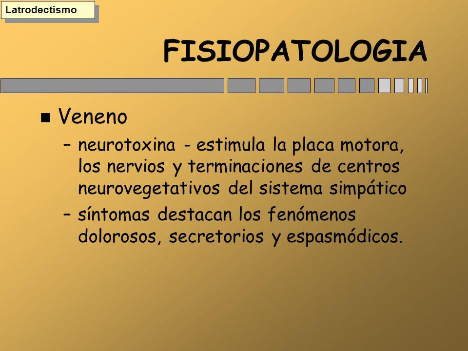 FISIOPATOLOGIA n Veneno –neurotoxina - estimula la placa motora, los nervios y terminaciones de centros neurovegetativos del sistema simpático –síntom