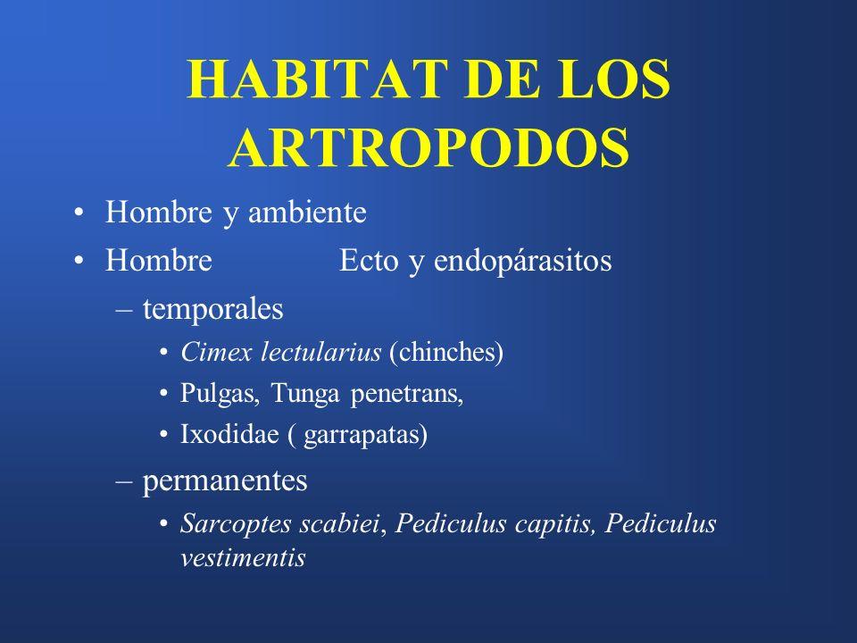 HABITAT DE LOS ARTROPODOS Hombre y ambiente Hombre Ecto y endopárasitos –temporales Cimex lectularius (chinches) Pulgas, Tunga penetrans, Ixodidae ( g