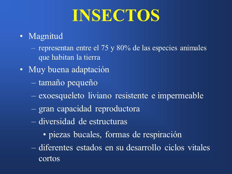 INSECTOS Magnitud –representan entre el 75 y 80% de las especies animales que habitan la tierra Muy buena adaptación –tamaño pequeño –exoesqueleto liv