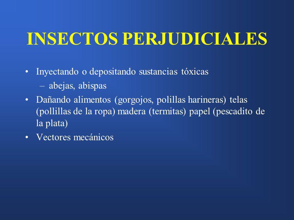 INSECTOS PERJUDICIALES Inyectando o depositando sustancias tóxicas –abejas, abispas Dañando alimentos (gorgojos, polillas harineras) telas (pollillas