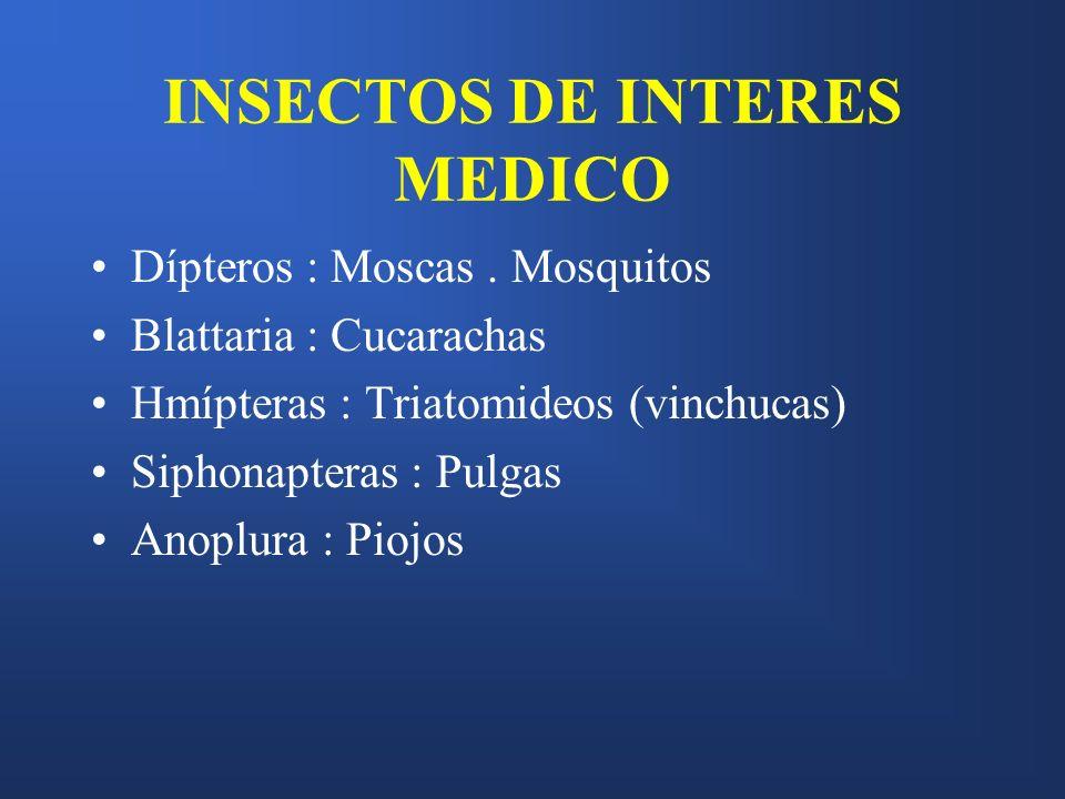 INSECTOS DE INTERES MEDICO Dípteros : Moscas. Mosquitos Blattaria : Cucarachas Hmípteras : Triatomideos (vinchucas) Siphonapteras : Pulgas Anoplura :
