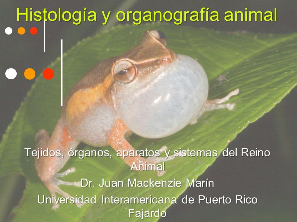 Histología y organografía animal Tejidos, órganos, aparatos y sistemas del Reino Animal Dr.