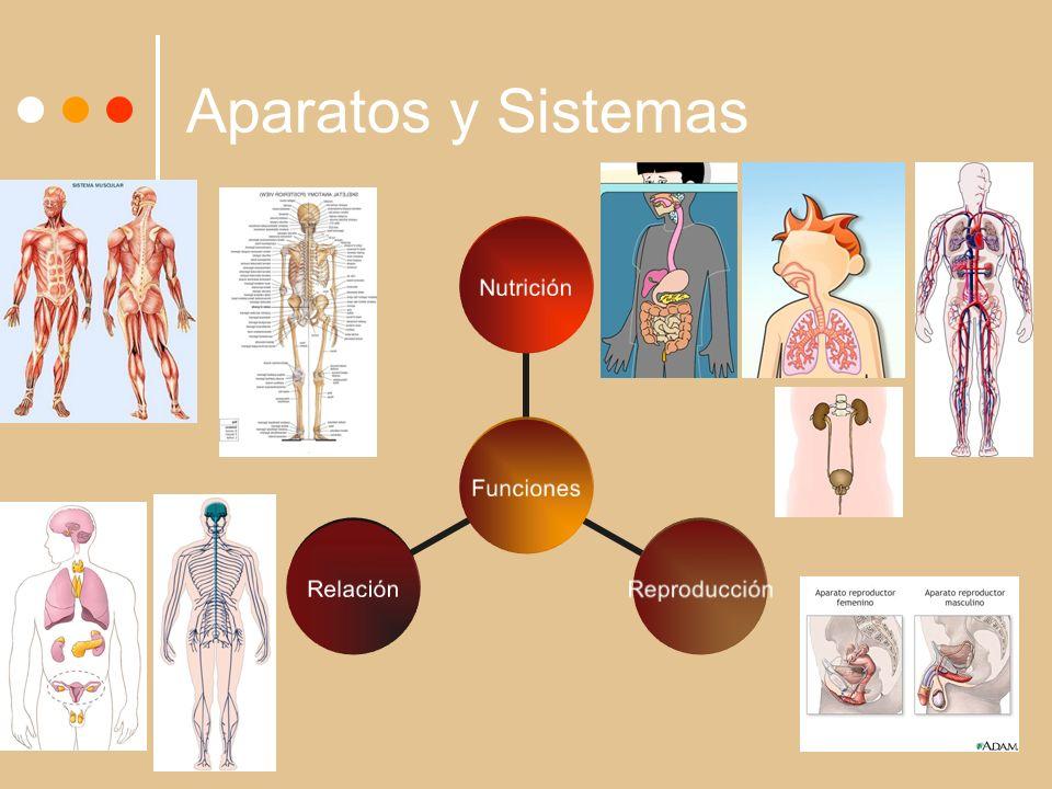 Aparatos y Sistemas Funciones NutriciónReproducciónRelación