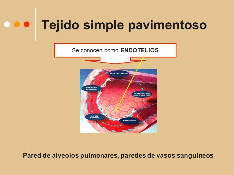 Tejido simple pavimentoso Se conocen como ENDOTELIOS Pared de alveolos pulmonares, paredes de vasos sanguíneos