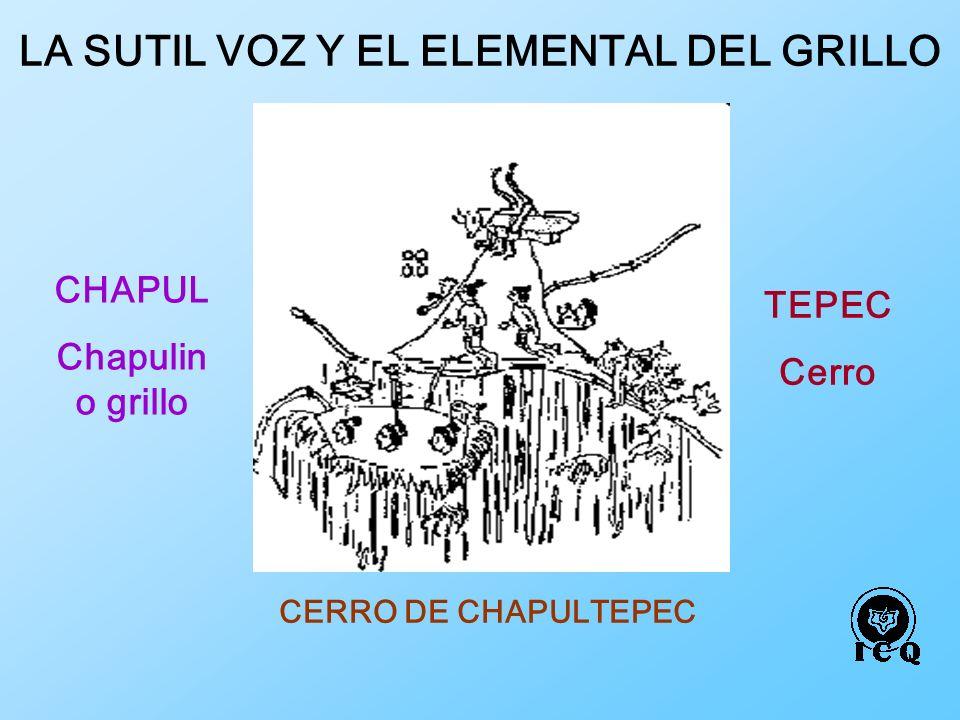 CERRO DE CHAPULTEPEC CHAPUL Chapulin o grillo TEPEC Cerro LA SUTIL VOZ Y EL ELEMENTAL DEL GRILLO