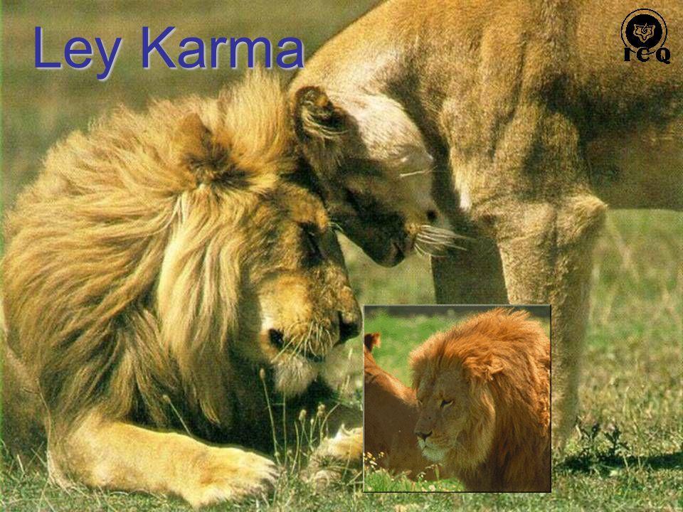 Ley Karma
